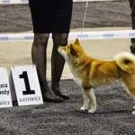 Hiroko Zwycięzca Mlodzieży