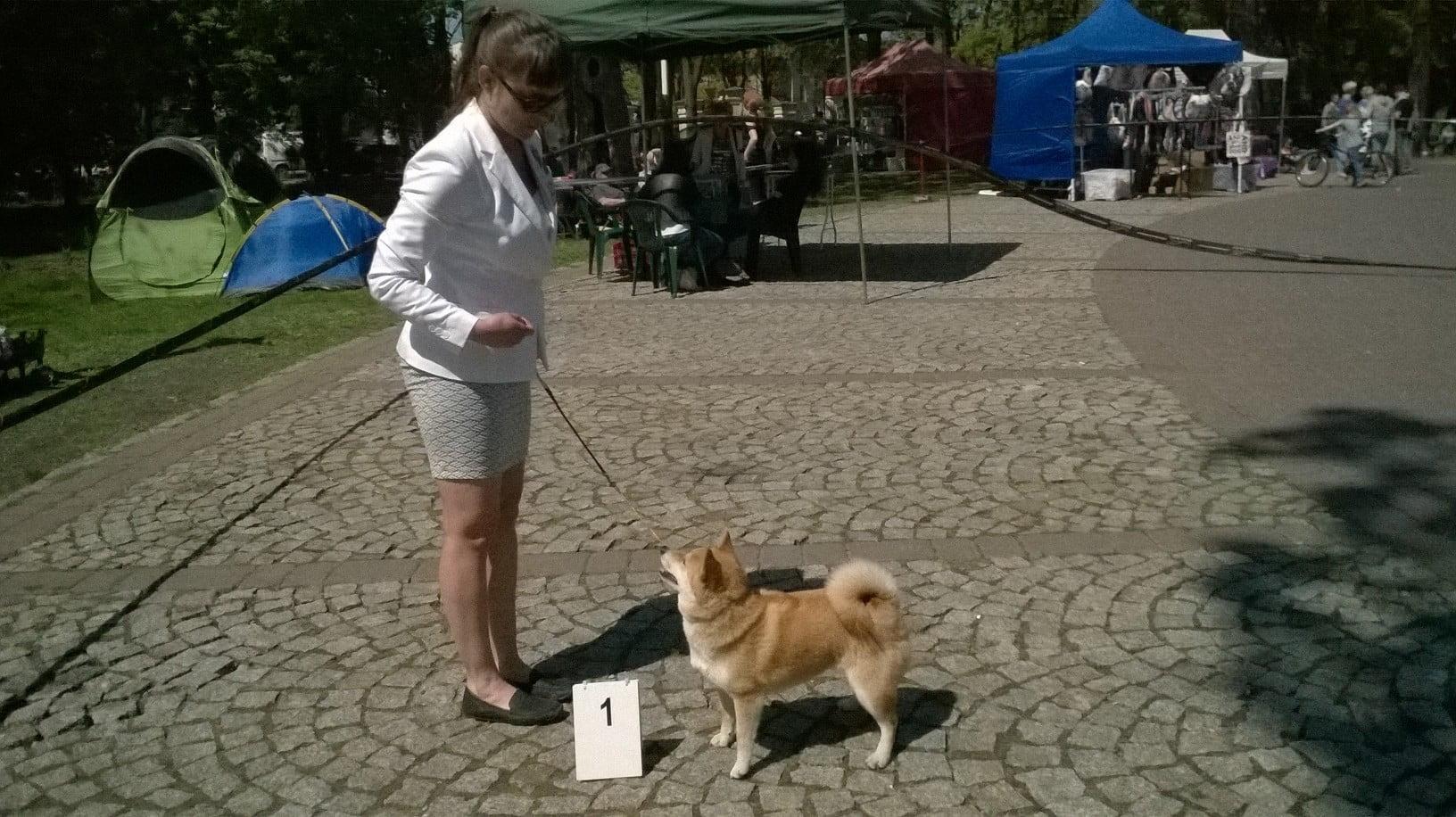 Krajowa wystawa psów grupy 5 i 9 w Mińsku Mazowieckim