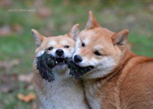 Hiroko & Aiko
