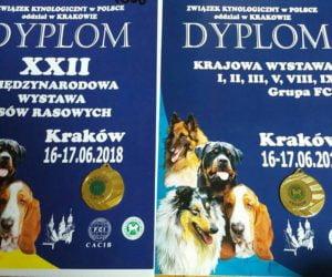 CHIHARU Łaciata Sfora – sukcesy na wystawach w Krakowie 2018