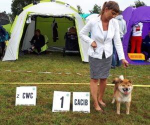 Nasze psy na Międzynarodowej Wystawie Sopot 2019
